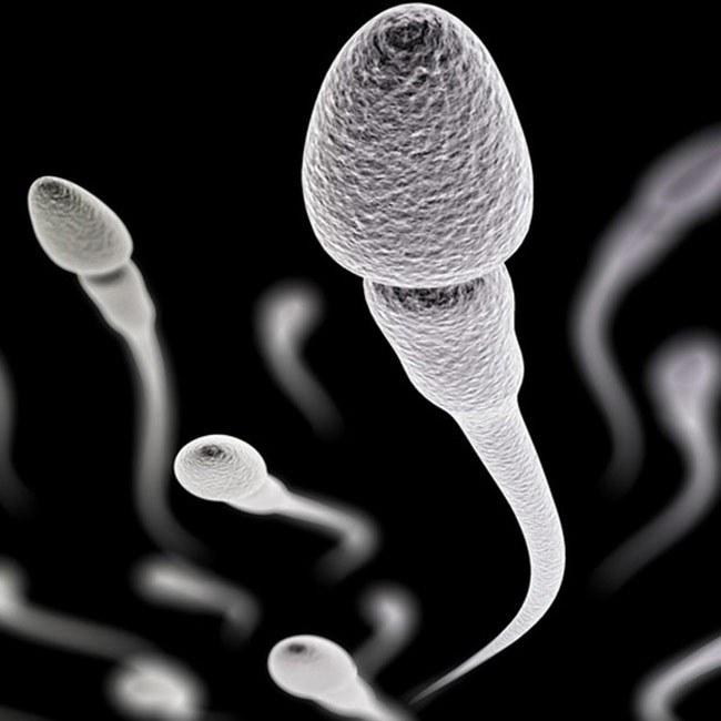 Sperma och påverkan till fertilitet