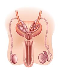penis piller för större snopp